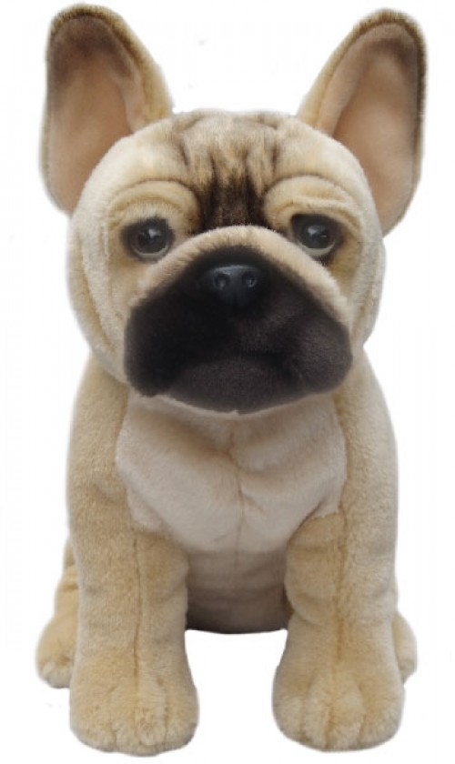 French Bulldog Brown Image